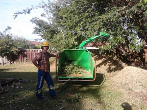 chipping poplar branches for mulch
