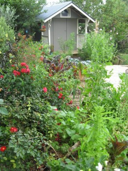 permaculture edible garden by Green Footprint