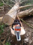 no emission, environmentally friendly tree pruning using electric chainsaw and hedge trimmer